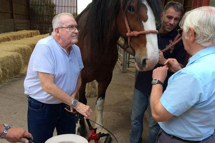 Denis and Ken are communicating with Karen the shire horse
